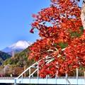 写真: 丹沢湖の鉄橋と紅葉。。富士山(^^) 20171112