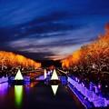 Photos: 撮って出し。。日も沈みイルミネーション点灯 昭和記念公園 12月23日