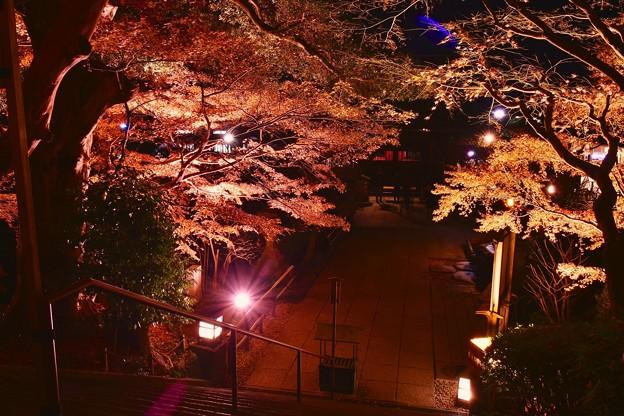鎌倉長谷寺の終わりの紅葉ライトアップ 20171209