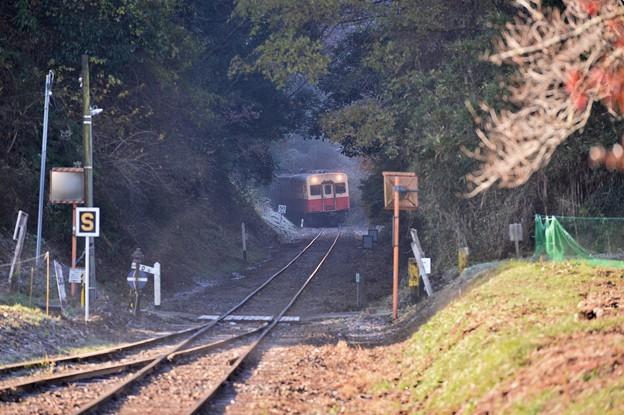 小湊鉄道。。まるで森のトンネルへキハ200  20171210