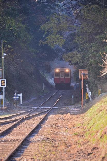 小湊鉄道。。ガタンゴトンガタンゴトンと音立てて走行 森のトンネル 20171210
