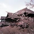 春之清水寺