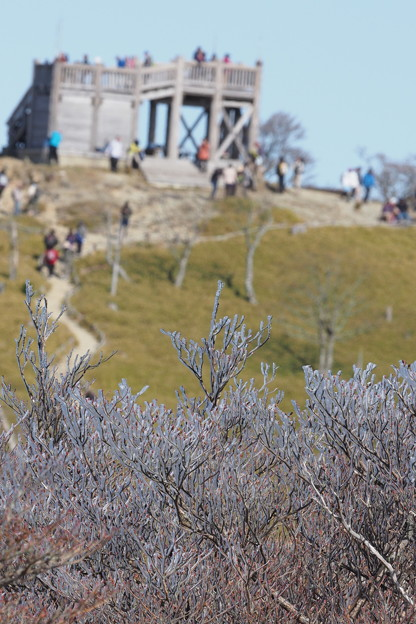 大台の樹氷1105 (2)