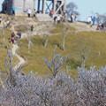 Photos: 大台の樹氷1105 (2)