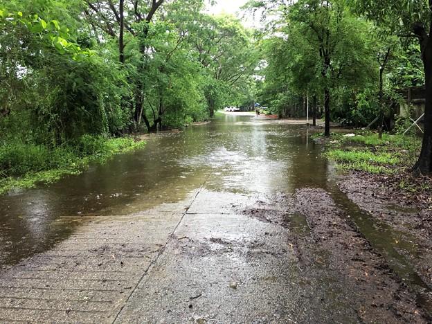 日野の車と冠水の道 (4)