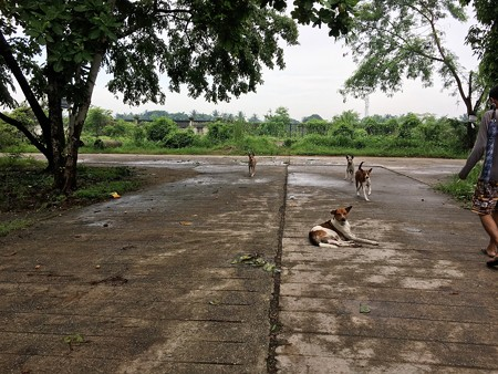 犬と花園の道 (1)