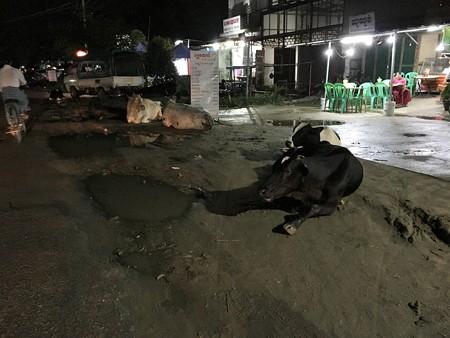 ヤーザディリッ 牛が座る道 (1)