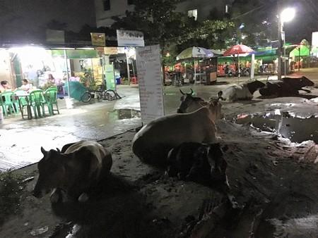 ヤーザディリッ 牛が座る道 (2)