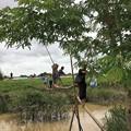 写真: Twantayの田圃 (4)