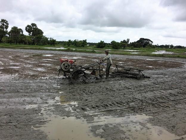 Twantayの田圃 (7)