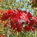 富里ダムの紅葉