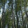 写真: 20171115京都嵐山嵯峨野