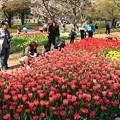 「Flower Festival」IN 昭和記念公園