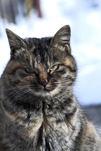 さすらいの猫
