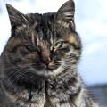 写真: さすらいの猫