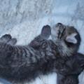 Photos: 赤ちゃん猫DSC02985