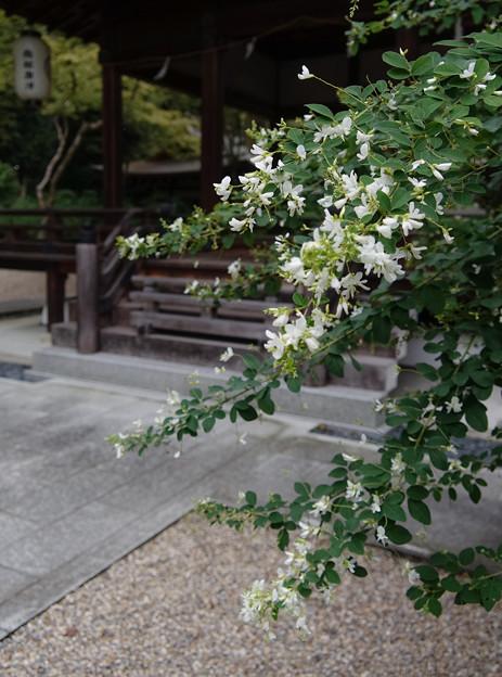 梨木神社DSC05657_ed