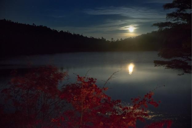 写真: 白駒池暮月出55-00065