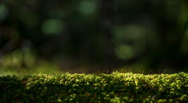 白駒苔の倒木-00564