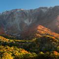 写真: 大山紅葉55-00169