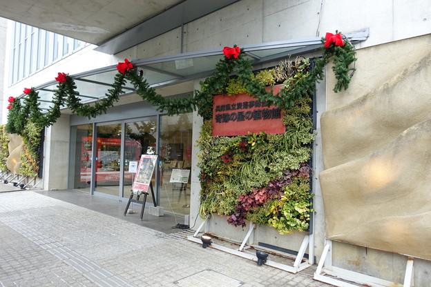 夢舞台温室入口DSC00271