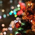写真: たまたまメリークリスマス
