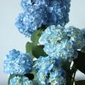今年も青の季節 1