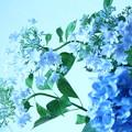 今年も青の季節 3