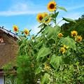 写真: 里山の夏