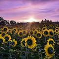 写真: 朝陽を待ちわびて