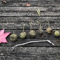 写真: 秋の音階