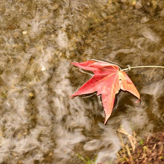 写真: 秋の気配