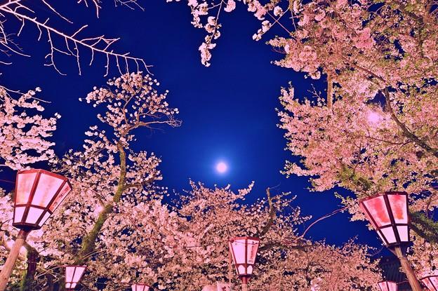 三嶋大社の夜桜が恋しくて・・・桃色吐息