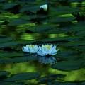 写真: GreenForest ~睡蓮~