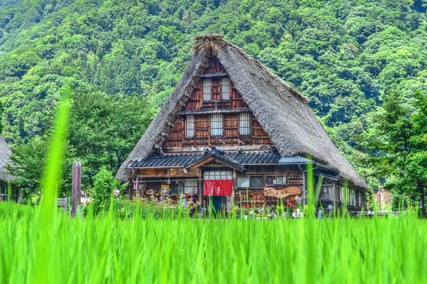 日本の夏・・・五箇山の夏