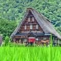 写真: 日本の夏・・・五箇山の夏