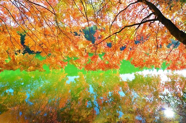 鏡面の秋景 ~南伊奈ケ湖~ 其の弐