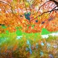 写真: 鏡面の秋景 ~南伊奈ケ湖~ 其の弐