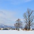 写真: 雪原の兄弟木