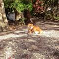 写真: 伽耶院の犬「じゅんのすけ」