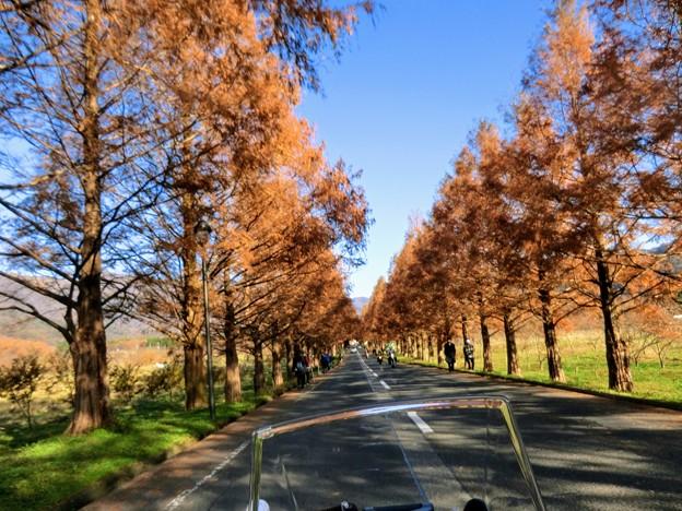 メタセコイア並木道はホコ天並みに賑わってた