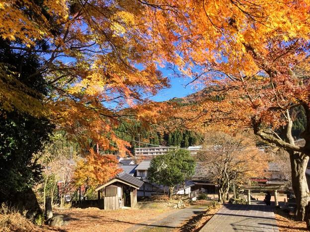 松木神社のもみじ