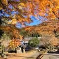 写真: 松木神社のもみじ