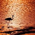 写真: 黄昏に魅せられて・・・