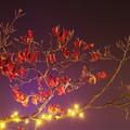 写真: 深まりゆく秋の夜に。