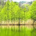 写真: 新緑の水辺