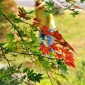 写真: 秋色2