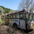 写真: バス全観