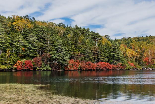 写真: 白駒池の秋