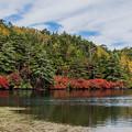 白駒池の秋